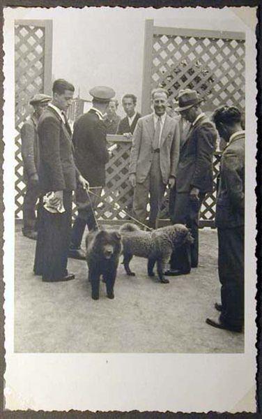 Mostra canina sotto il Fascismo-Hundeaustellung unter dem Faschismus 001 _16_.jpg