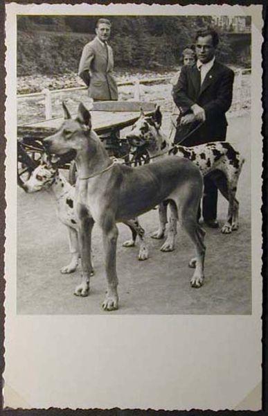 Mostra canina sotto il Fascismo-Hundeaustellung unter dem Faschismus 001 _19_.jpg