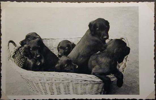 Mostra canina sotto il Fascismo-Hundeaustellung unter dem Faschismus 001 _26_.jpg