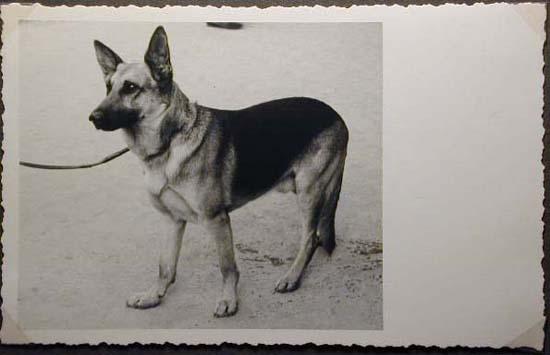 Mostra canina sotto il Fascismo-Hundeaustellung unter dem Faschismus 001 _27_.jpg