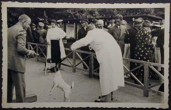 Mostra canina sotto il Fascismo-Hundeaustellung unter dem Faschismus 001 _6_.jpg