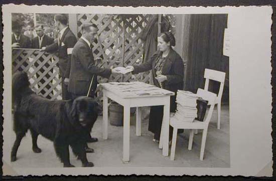 Mostra canina sotto il Fascismo-Hundeaustellung unter dem Faschismus 001 _8_.jpg