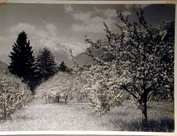 Bellissime immagini cartolina di Merano e dintorni- Viele wunderschoene Bilder von Meran und Umgebungen _18_.jpg