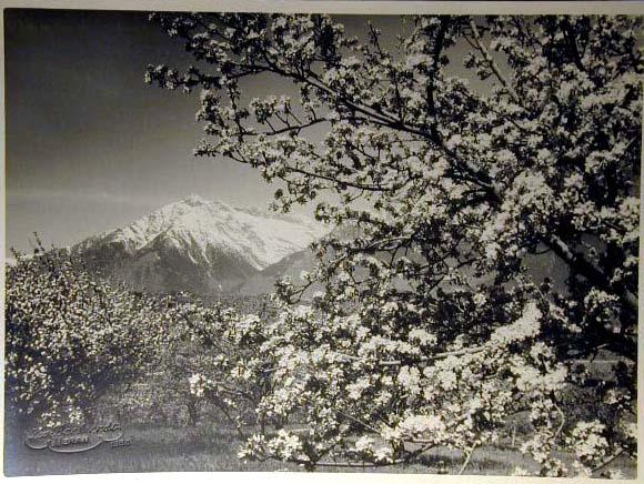 Bellissime immagini cartolina di Merano e dintorni- Viele wunderschoene Bilder von Meran und Umgebungen _19_.jpg