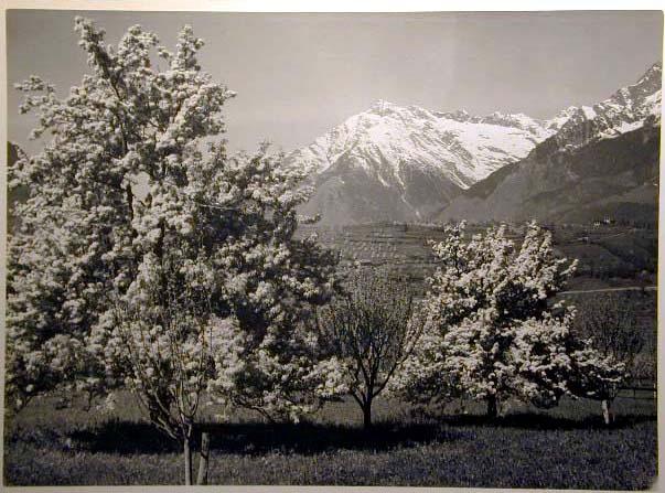 Bellissime immagini cartolina di Merano e dintorni- Viele wunderschoene Bilder von Meran und Umgebungen _20_.jpg