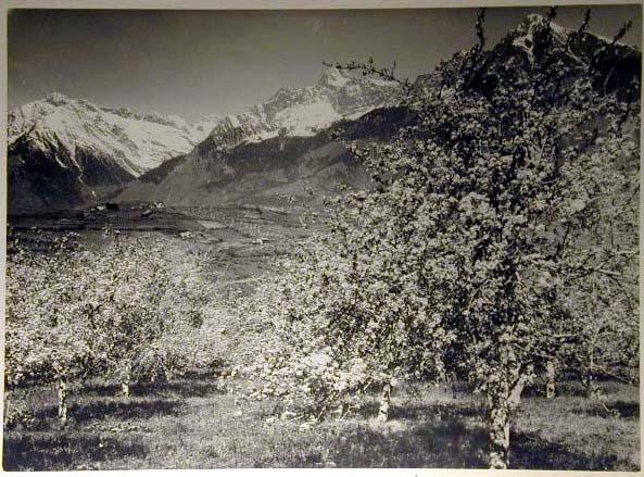 Bellissime immagini cartolina di Merano e dintorni- Viele wunderschoene Bilder von Meran und Umgebungen _21_.jpg