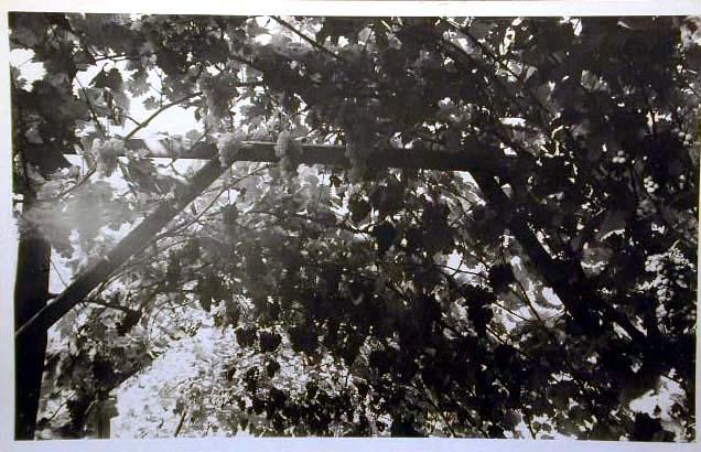 Bellissime immagini cartolina di Merano e dintorni- Viele wunderschoene Bilder von Meran und Umgebungen _2_.jpg