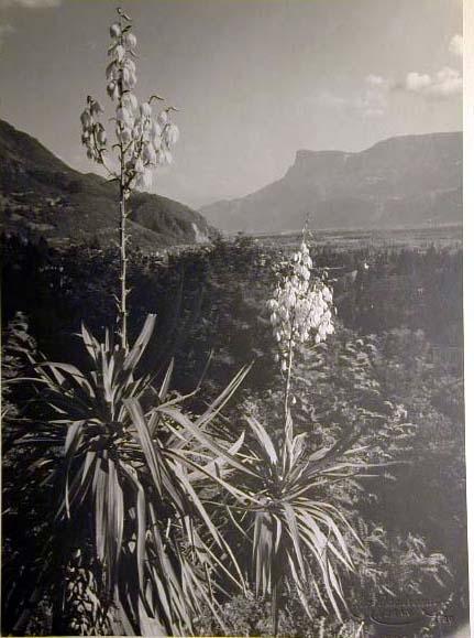 Bellissime immagini cartolina di Merano e dintorni- Viele wunderschoene Bilder von Meran und Umgebungen _37_.jpg