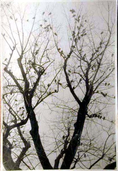 Bellissime immagini cartolina di Merano e dintorni- Viele wunderschoene Bilder von Meran und Umgebungen _5_.jpg