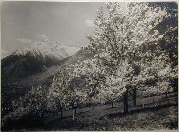 Bellissime immagini cartolina di Merano e dintorni- Viele wunderschoene Bilder von Meran und Umgebungen _64_.jpg