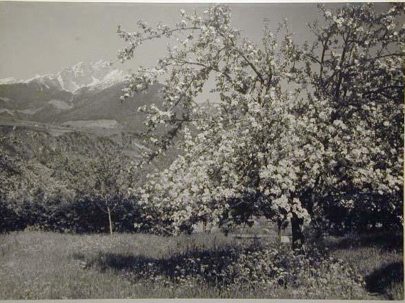Bellissime immagini cartolina di Merano e dintorni- Viele wunderschoene Bilder von Meran und Umgebungen _66_.jpg