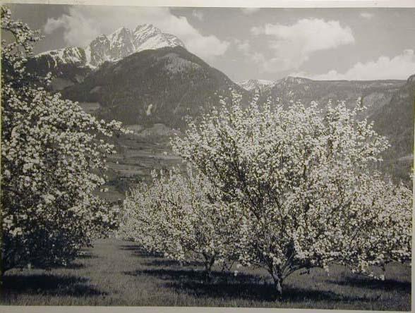 Bellissime immagini cartolina di Merano e dintorni- Viele wunderschoene Bilder von Meran und Umgebungen _67_.jpg