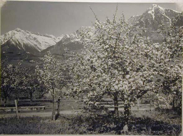 Bellissime immagini cartolina di Merano e dintorni- Viele wunderschoene Bilder von Meran und Umgebungen _68_.jpg