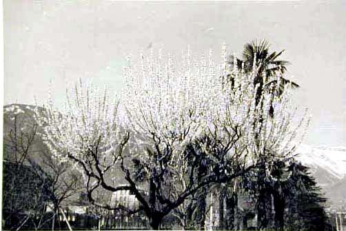 Bellissime immagini cartolina di Merano e dintorni- Viele wunderschoene Bilder von Meran und Umgebungen _7_.jpg