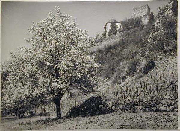 Bellissime immagini cartolina di Merano e dintorni- Viele wunderschoene Bilder von Meran und Umgebungen _80_.jpg