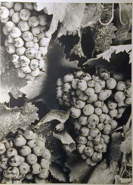 Bellissime immagini cartolina di Merano e dintorni- Viele wunderschoene Bilder von Meran und Umgebungen _85_.jpg