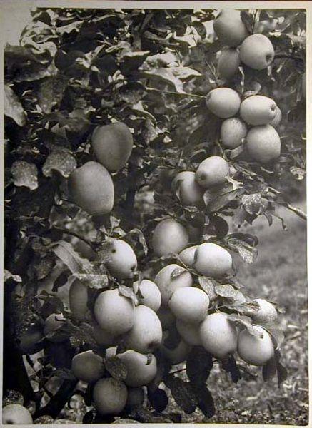 Bellissime immagini cartolina di Merano e dintorni- Viele wunderschoene Bilder von Meran und Umgebungen _86_.jpg