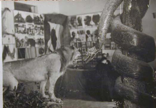 Mostra Missionaria in periodo fascista _17_.jpg