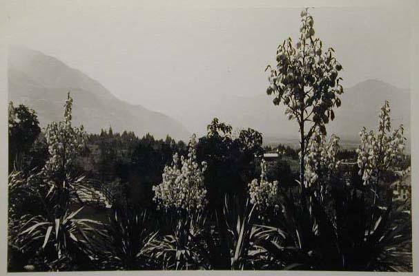 Meran-o-1940-50091.jpg