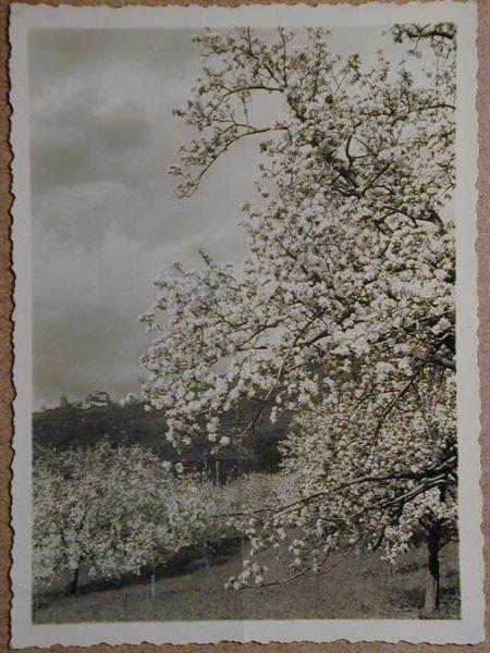 Meran-o-1940-50098.jpg