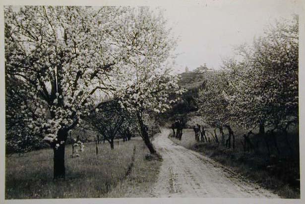 Meran-o-1940-50125.jpg