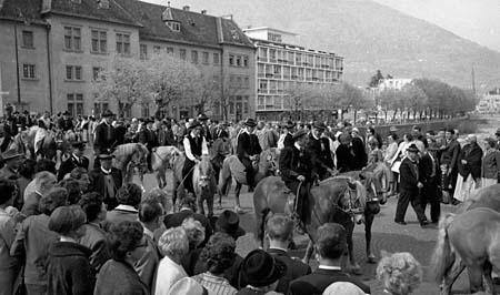 avelignesi-haflinger 1961003.jpg