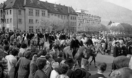 avelignesi-haflinger 1961004.jpg