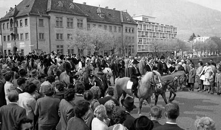 avelignesi-haflinger 1961005.jpg