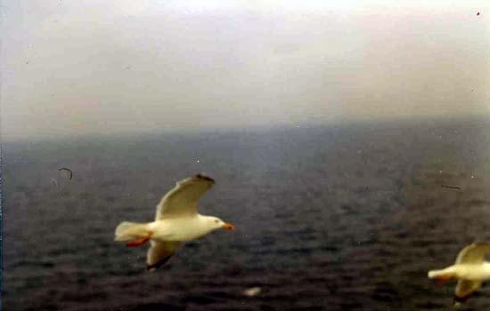 Verso Capo Nord - nach Nordkap _22_.jpg